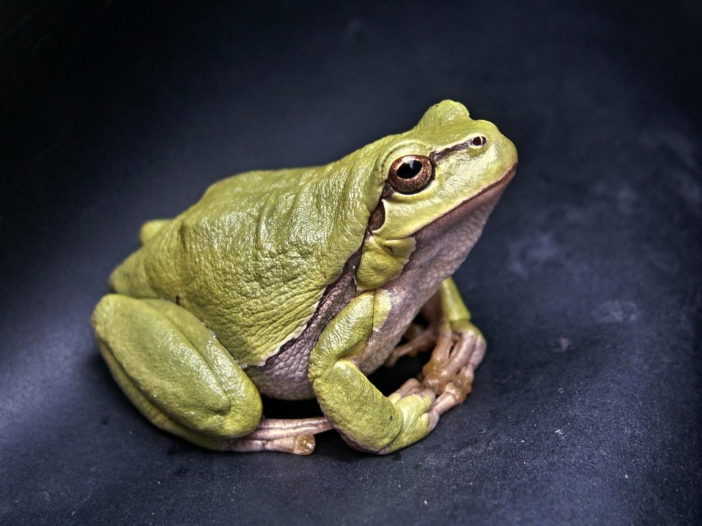 DIY remedies to get rid of frogs.
