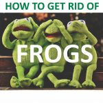 How to Get Rid of Frogs in Your Garden (Ultimate Guide) - 2019