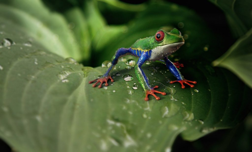 Get rid of frogs in the garden.