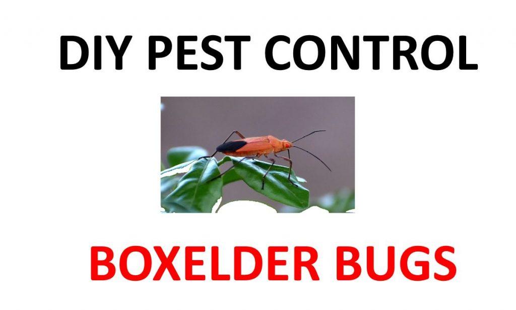 Kill boxelder bugs.