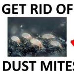 How to Get Rid of Dust Mites Naturally (2021)