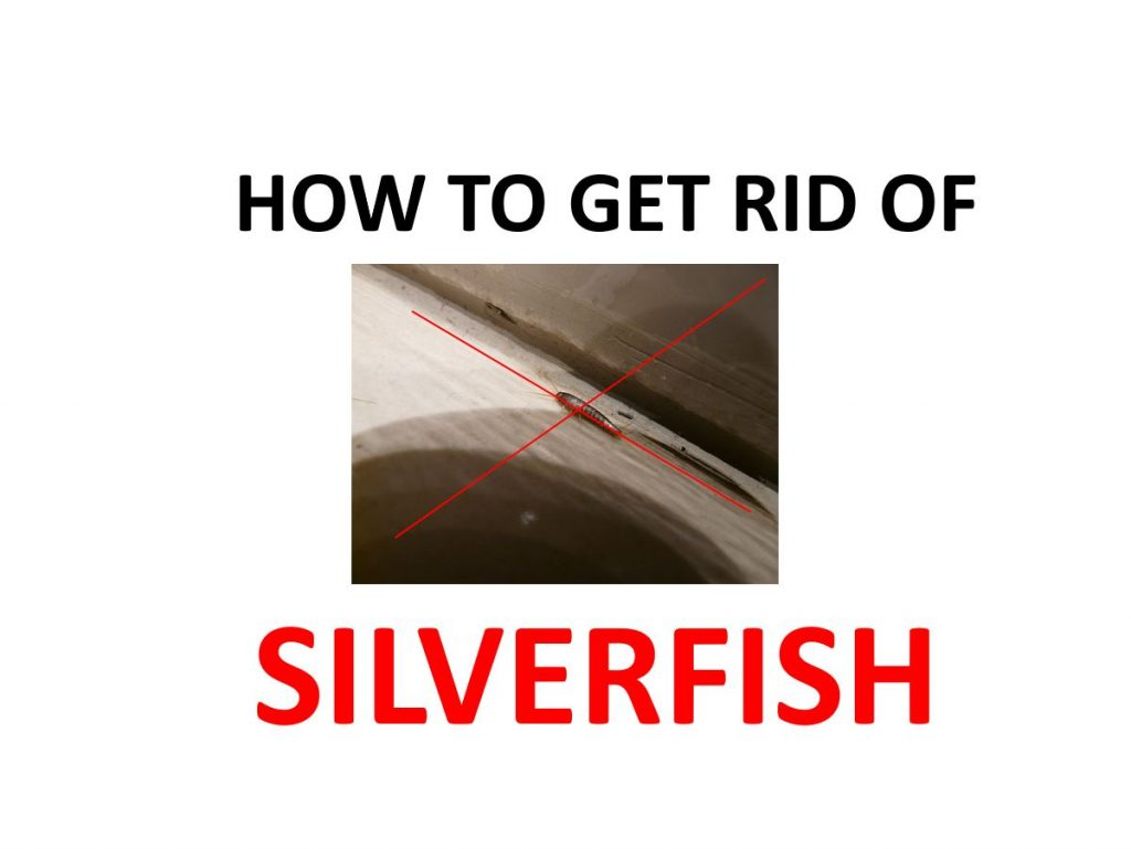 Natural home DIY silverfish remedies, spays, traps.