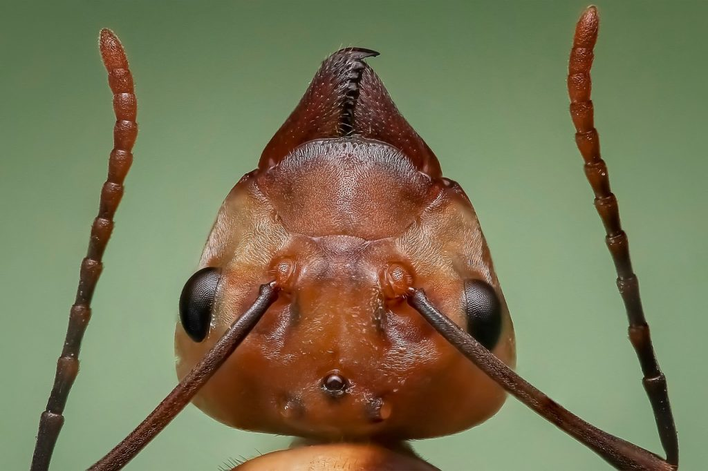 A macro shot of an ant head.