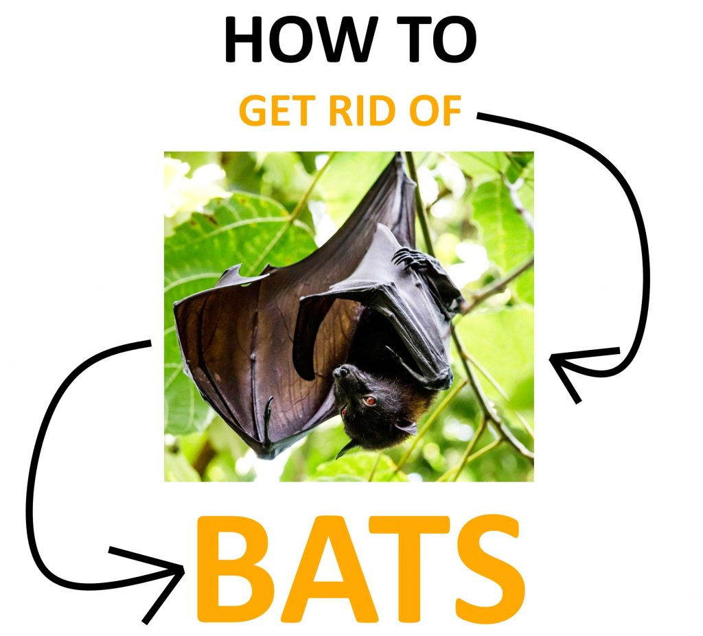 Learn how to get rid of bats naturally DIY.