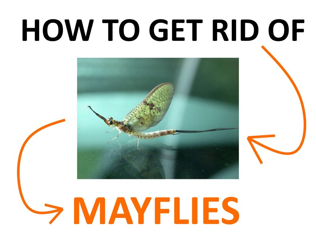 Mayfly DIY pest control.