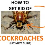 How to Get Rid of Cockroaches Naturally (Ultimate Guide)