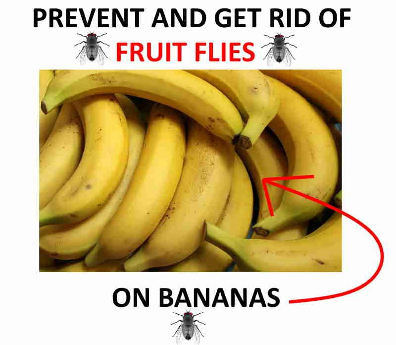 Get rid of and prevent fruit flies on your bananas!