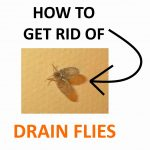 How to Get Rid of Drain Flies Naturally (Fast)