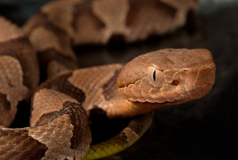 These are venomous snakes that bite.