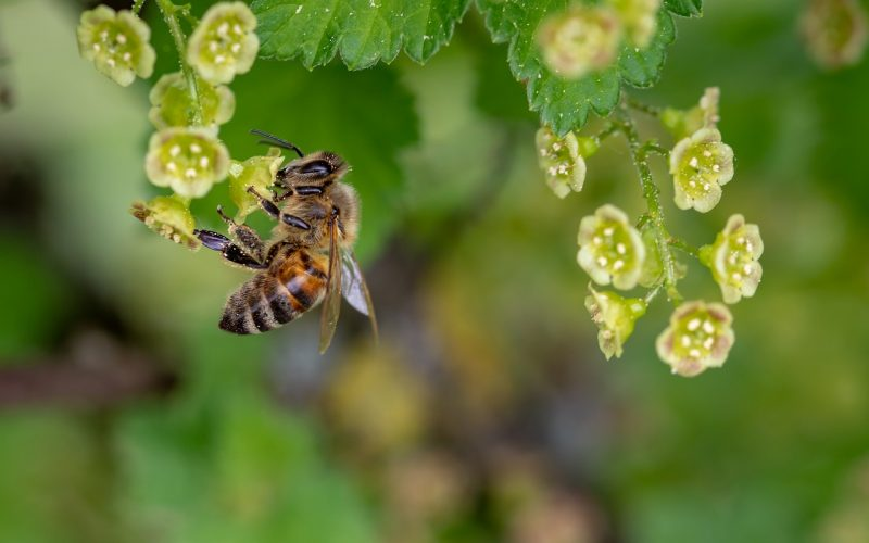 You can repel bees naturally from landing on your flowers.