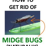 How to Get Rid of Midge Bugs (No-See-Ums) Naturally