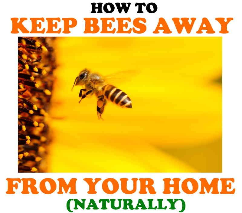 Repel bees naturally from your home and garden!