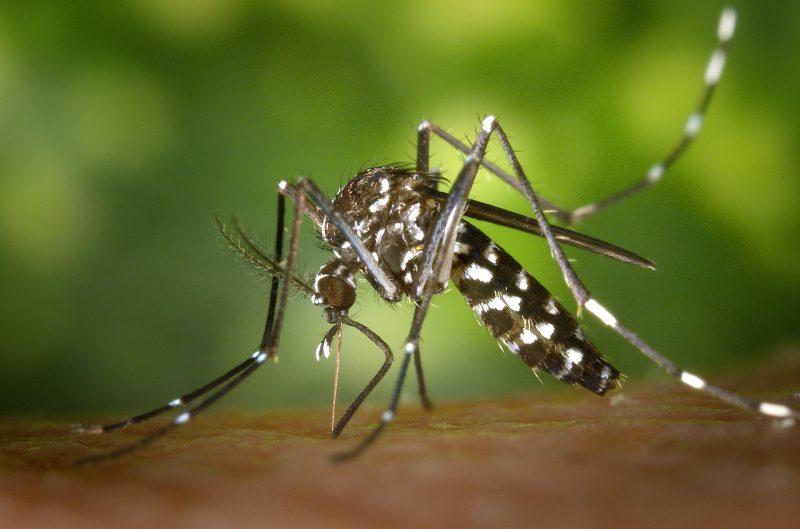 Mosquito bite.