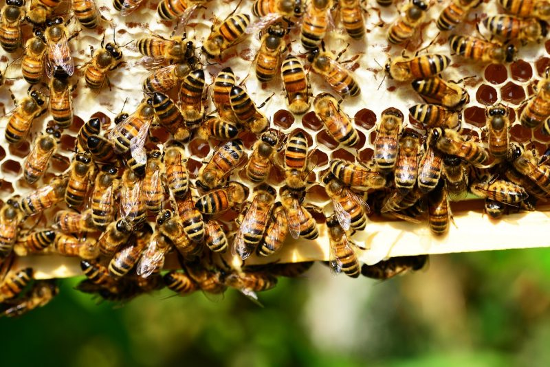 You can get rid of bees and wasps with plants- just like these bees.