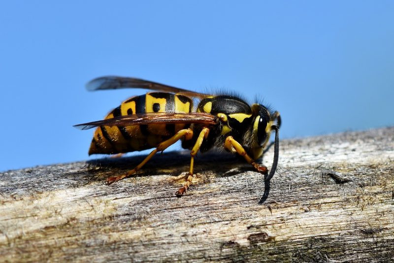 Wasp on log.