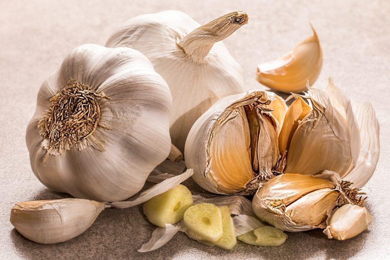 Garlic repels field mice.