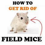 How to Get Rid of Field Mice Naturally (DIY Home Remedies)