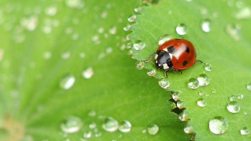 Ladybugs can help control spiders.