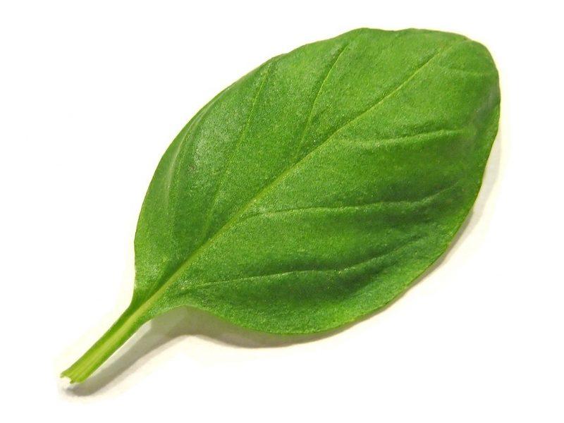 Basil leaf.