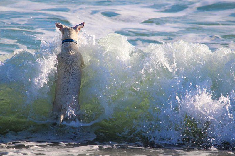Dog on beach.