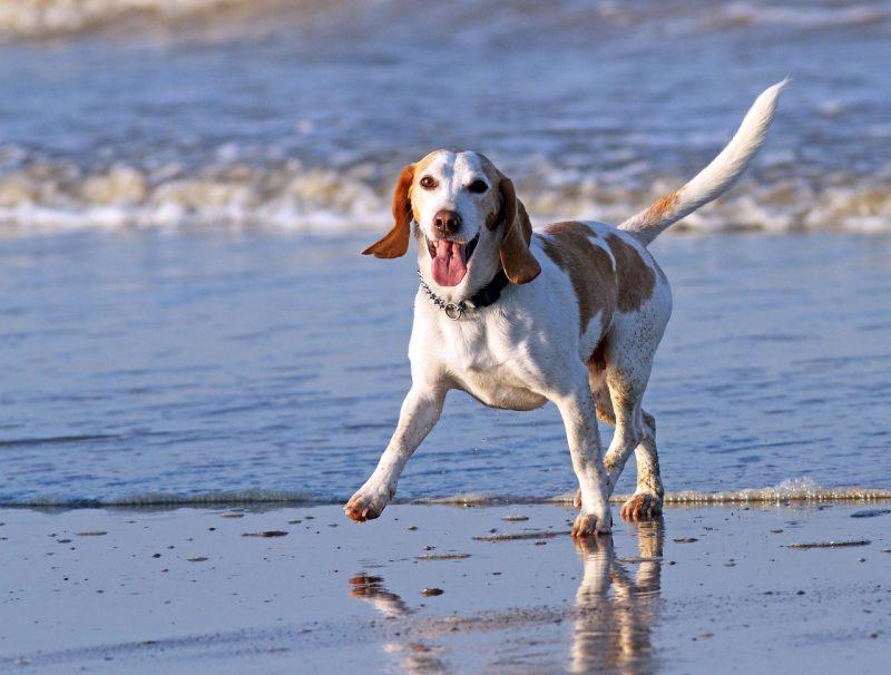 Dog on beach being happy.