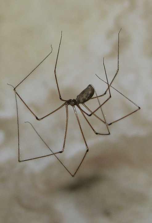 Spiders infest homes because of the indoor plants.