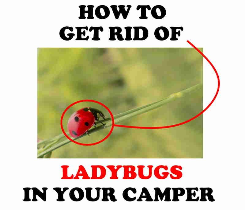 How to get rid of ladybugs in camper.