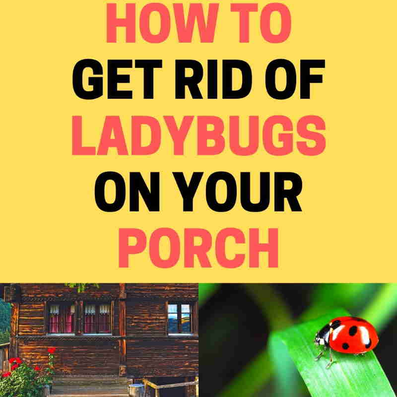 Rid ladybugs on the porch.