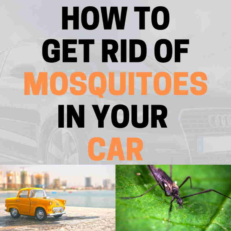 Mosquitoes in the car.