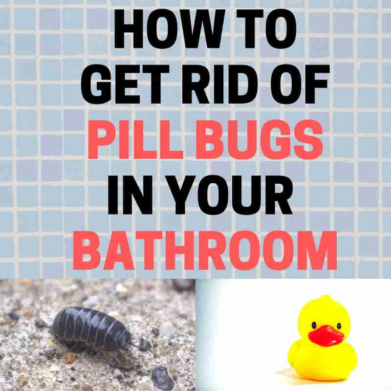Roly polys in the bathroom.