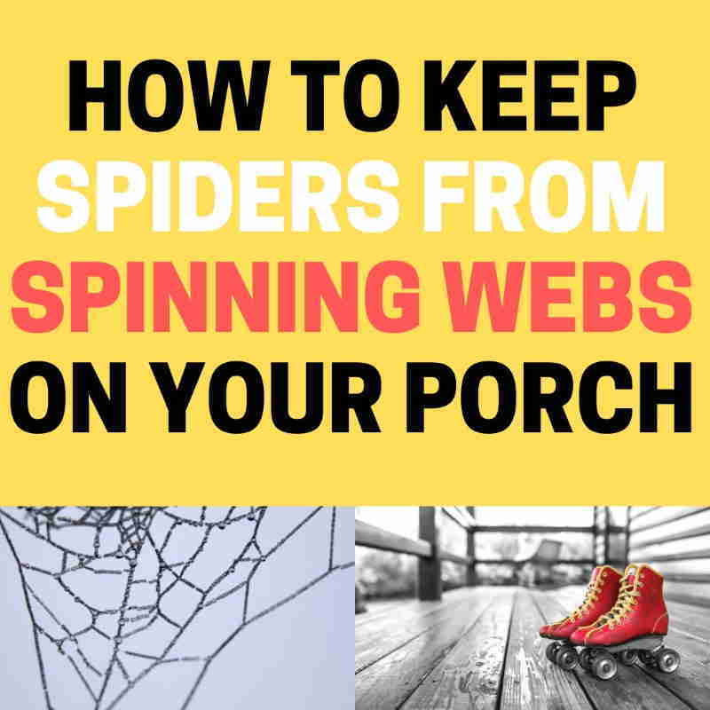 How to keep spiders from making webs on porch.