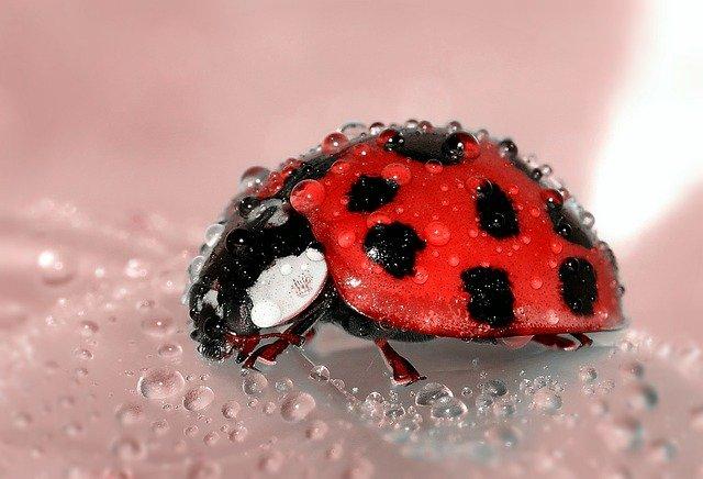 Ladybug wet.