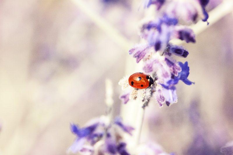 Ladybug on plant.