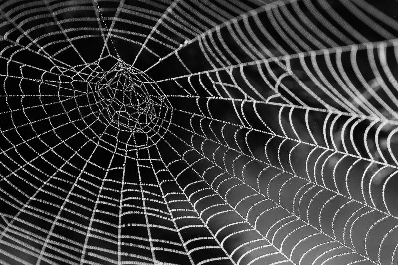 Jumping spider silk web.