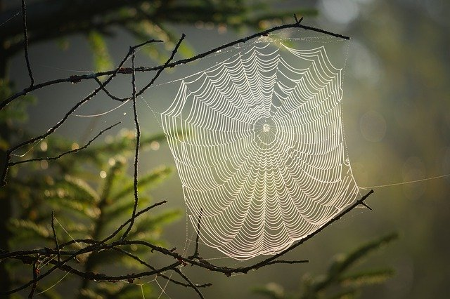 Spider web between trees outside.