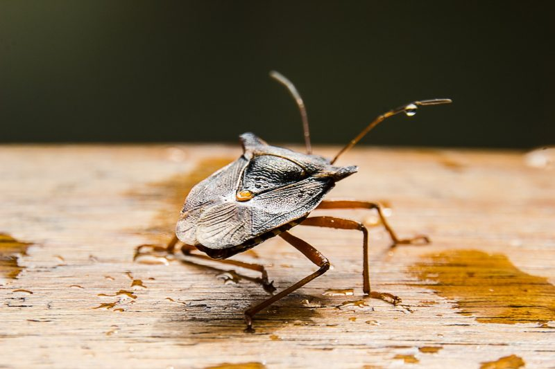 Stink bug outdoors.