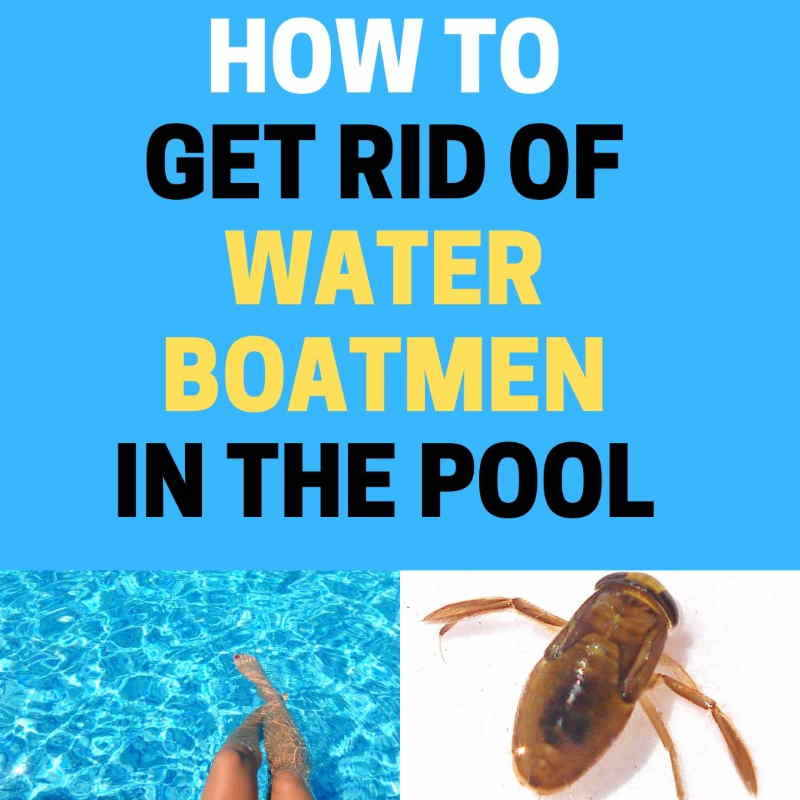 How to get rid of boatman in pool