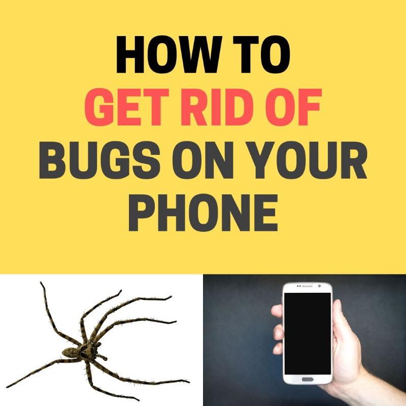 Bugs on phone.