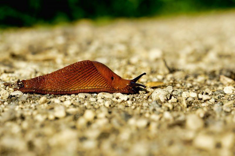 Slug outdoors.