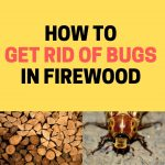 How to Get Rid of Bugs in Firewood and Woodpiles (Naturally)