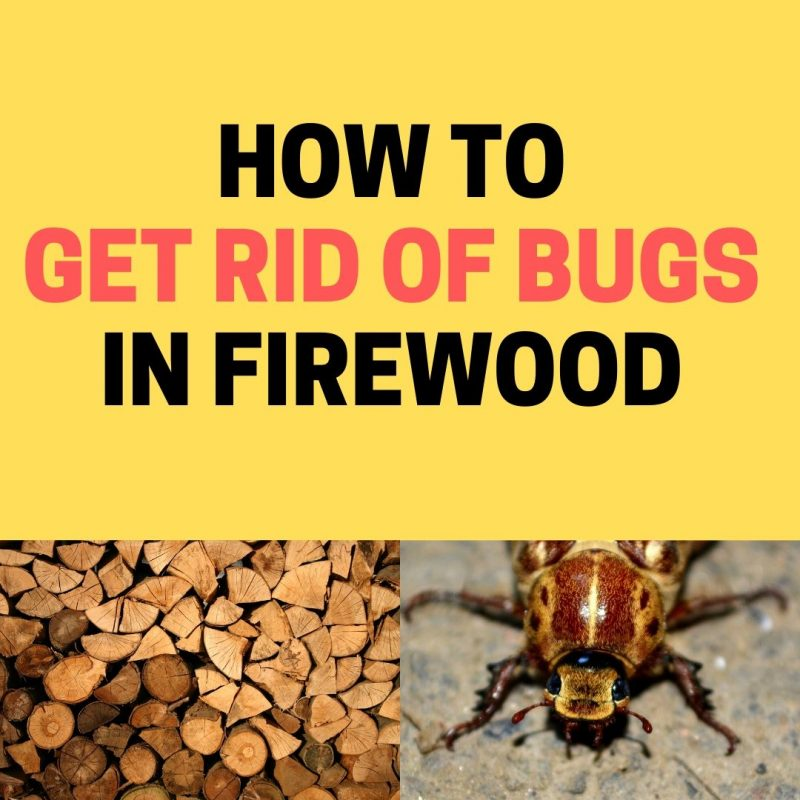 How to get rid of bugs on firewood naturally.