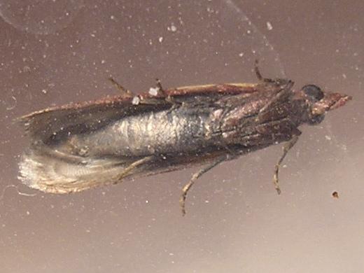 Kill meal moths.