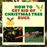 How to Get Rid of Bugs on a Christmas Tree (Updated 2021)