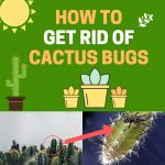 How to Get Rid of Cactus Bugs Naturally (Easy DIY)