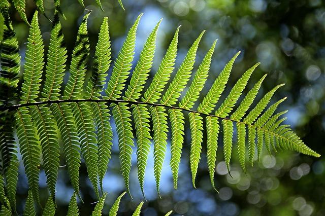 Fern plant resists slugs.