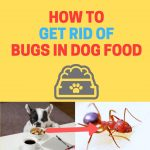 How to Get Rid of Bugs in Dog Food (Naturally)
