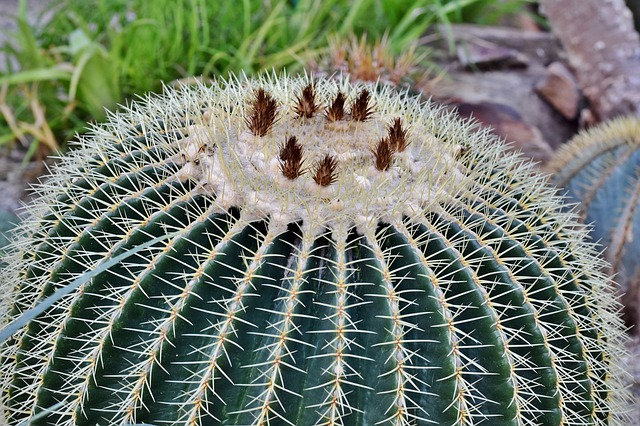 Cactus ball with pests all over it.