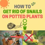 How to Get Rid of Snails in Potted Plants (Fast and Easy)