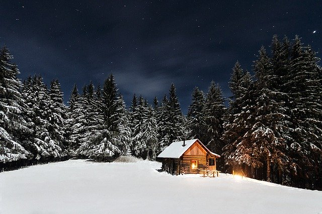 Christmas trees surrounding a cabin.