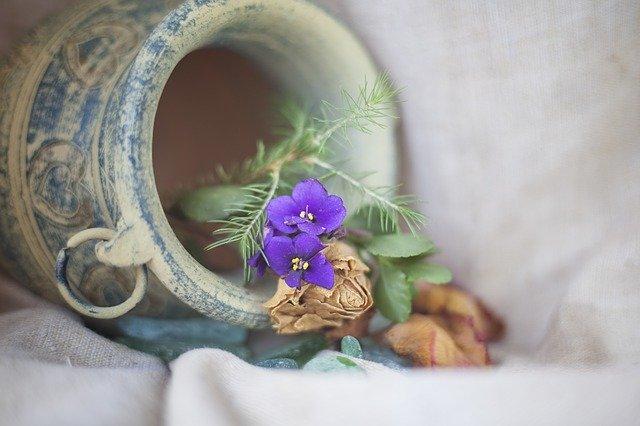 Snail in flower planter.